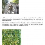 CYannic -Projet APLA Père Lachaise2013